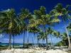 coconut-palms-taunga-island-vavau-island-group-tonga