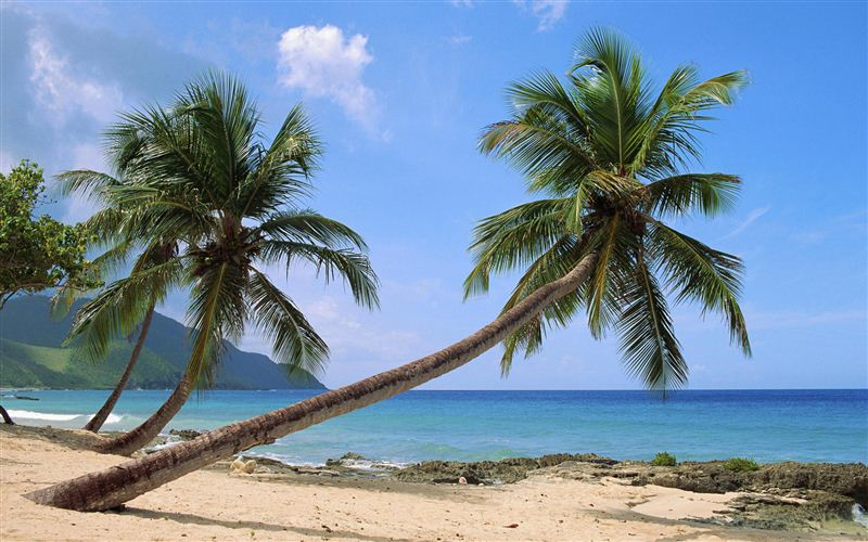 Palm Trees on St. Croix Beach