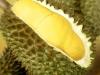 bali-durian