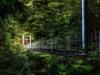forest-on-japanese-yakushima-island-1