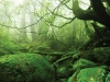 forest-on-japanese-yakushima-island-10