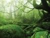 forest-on-japanese-yakushima-island-10