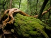 forest-on-japanese-yakushima-island-11