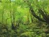 forest-on-japanese-yakushima-island-12