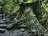 forest-on-japanese-yakushima-island-2