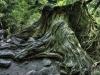 forest-on-japanese-yakushima-island-2