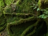 forest-on-japanese-yakushima-island-3