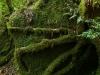 forest-on-japanese-yakushima-island-3