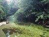 forest-on-japanese-yakushima-island-6