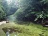 forest-on-japanese-yakushima-island-6