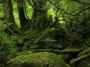 forest-on-japanese-yakushima-island-7