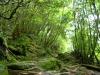forest-on-japanese-yakushima-island-8