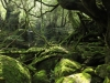 forest-on-japanese-yakushima-island-9