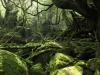 forest-on-japanese-yakushima-island-9