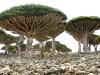 socotra-island-yemen-14