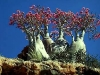 socotra-island-yemen-9