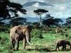 african-elephants-kilimanjaro