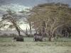 african-elephants-tanzania-africa