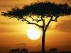 blue-wildebeests-at-sunrise-masai-mara-kenya