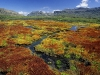 colorful-mosses-cedarberg-wilderness-area-northern-cape-south-africa