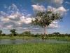 comb-ducks-on-lake-savute-chobe-national-park-botswana