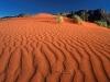 crawling-on-the-dune-namib-rand-nature-reserve-namibia