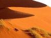 crossing-the-sand-dunes-of-sossusvlei-park-namibia-africa
