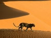 desert-passage-sossusvlei-park-namibia-africa