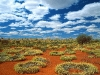 old-spinifex-rings-little-sandy-desert-australia