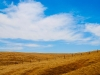 resized_california-landscape
