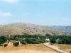 resized_olive-trees-crete