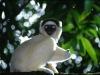 a-lemur-in-madagascar