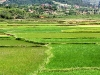 rice-field-in-madagascar