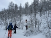 Ski touring up through the forest in the Lyngen Alps